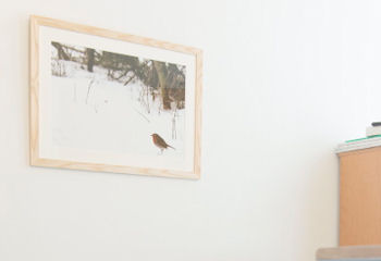 Framed image of a bird on a hospital wall