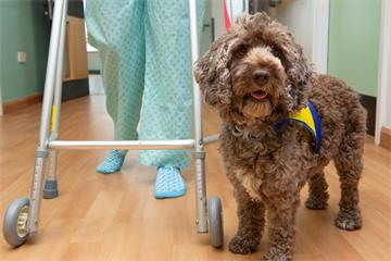 Oxford University Hospitals hires pup to offer pet therapy to patients