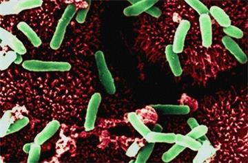 Antibiotics, not dirty hospitals, the main cause of C. difficile epidemic