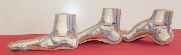 what does an orthotic insert do