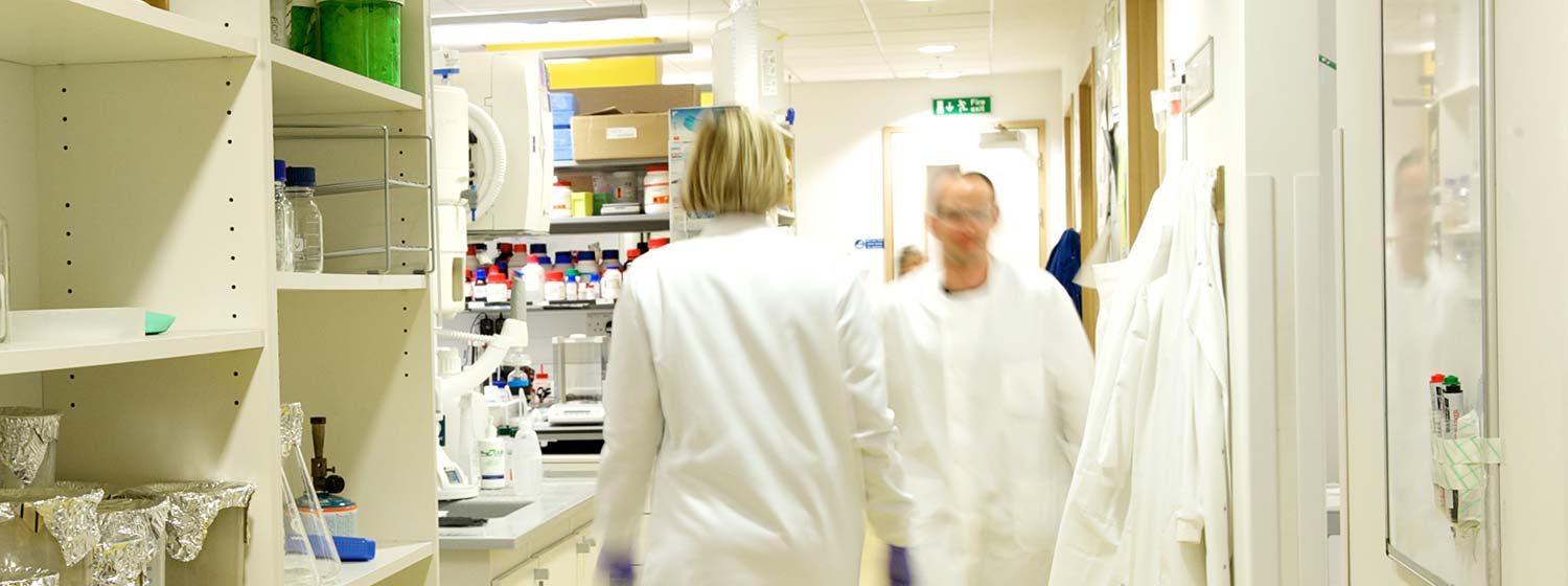 Cancer researchers in a laboratory